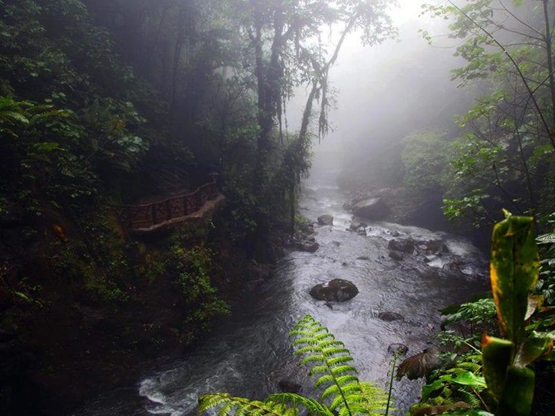 Het regenseizoen in Costa Rica zorgt voor een groene natuur