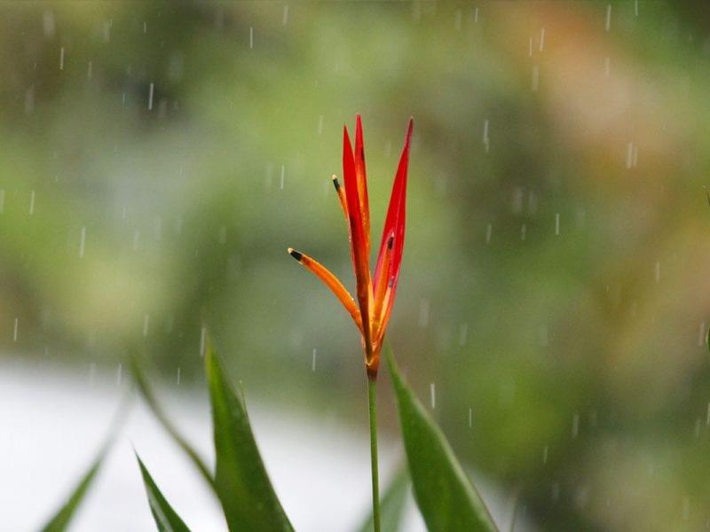 Beste reistijd Costa Rica - Zo ziet het weer en klimaat er per maand uit