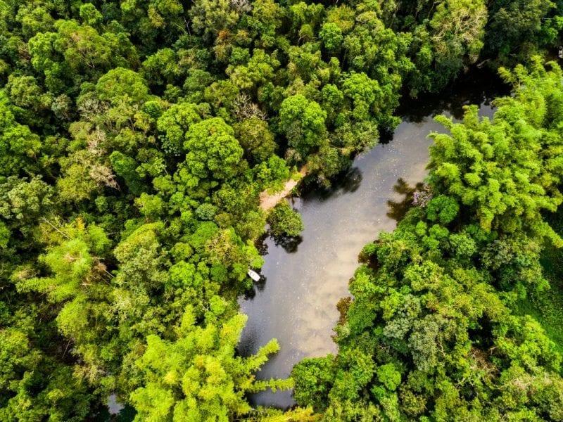 De Amazone Zuid-Amerika